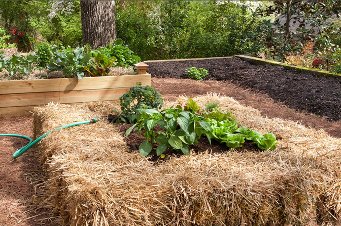 Creative Gardening: Getting a Fresh Start