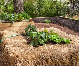 Creative Gardening: Getting a Fresh Start